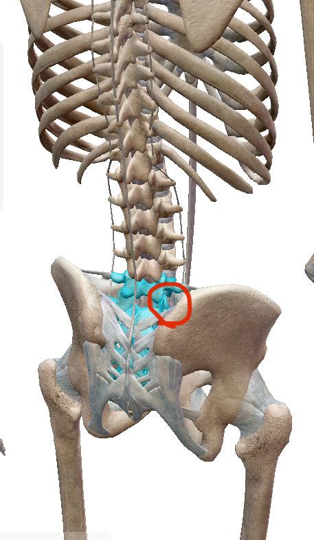 骨盤の関節が引っかかる写真