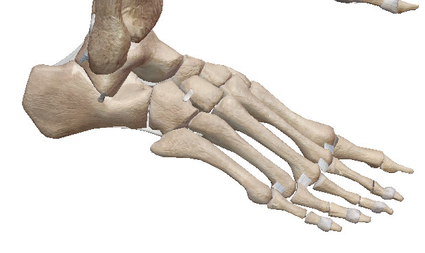 すねの痛みを26個の骨から改善する