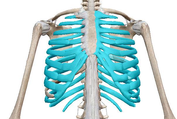 """セルフで自律神経を整えられるのは""""深呼吸""""だけ"""