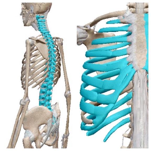 めまい・ふらつき・動悸・頭痛・疲れの元凶は関節の動きが関係