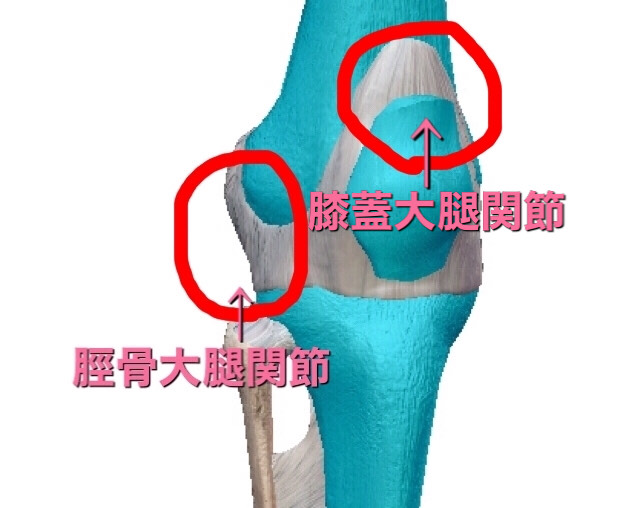 膝の2つの関節の動きを調整